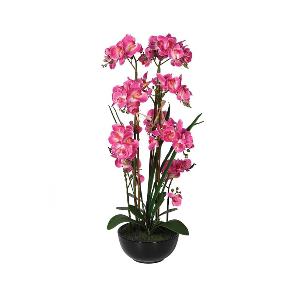 pink orchid with black pot