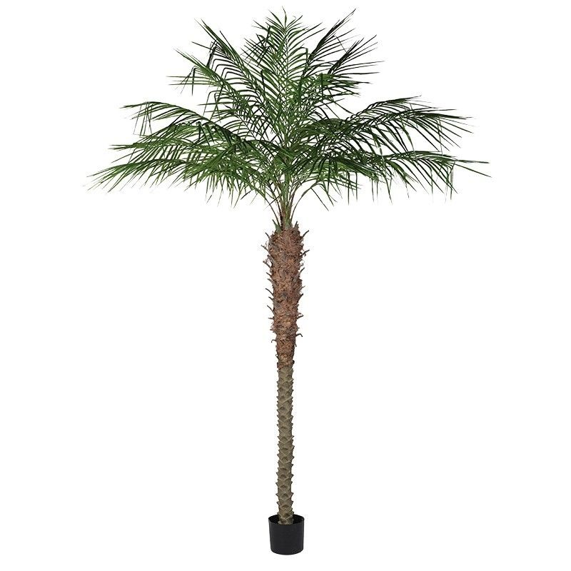 a tall palm plant