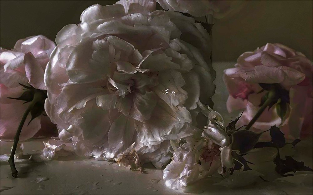 A stunning close up photograph of roses which looks like a painting